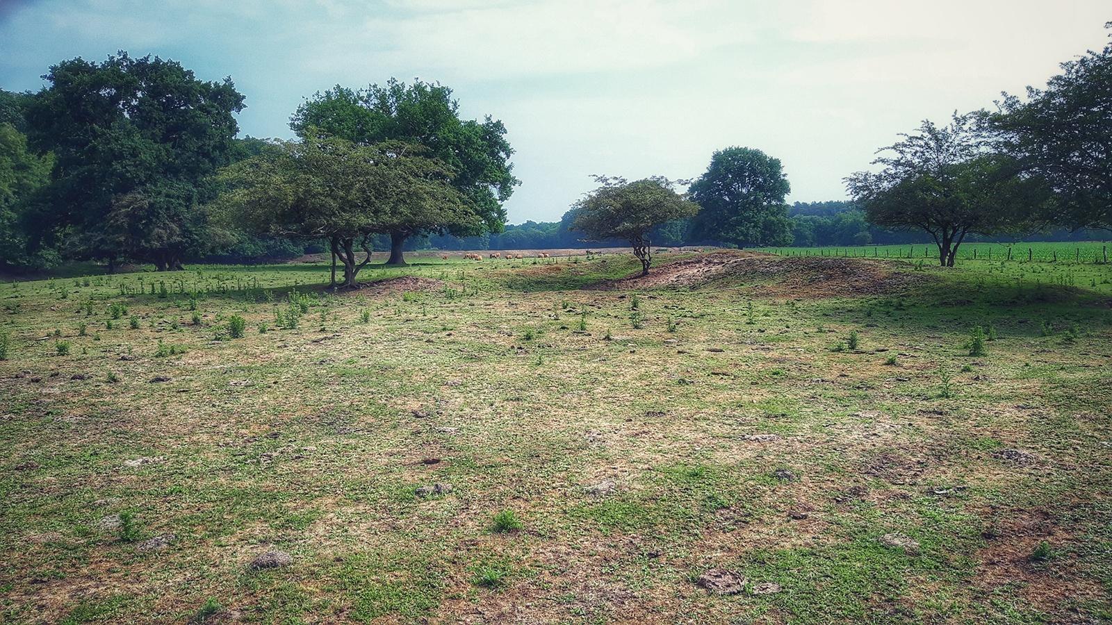 Landschaft mit Solitärbäumen Nahe Meppen