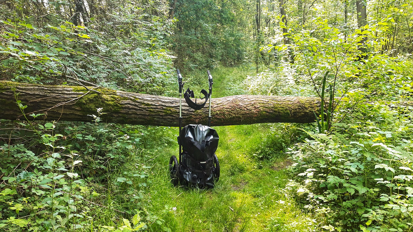 Pilgerwagen steht auf einem Pfad vor einem umgestürzten Baum