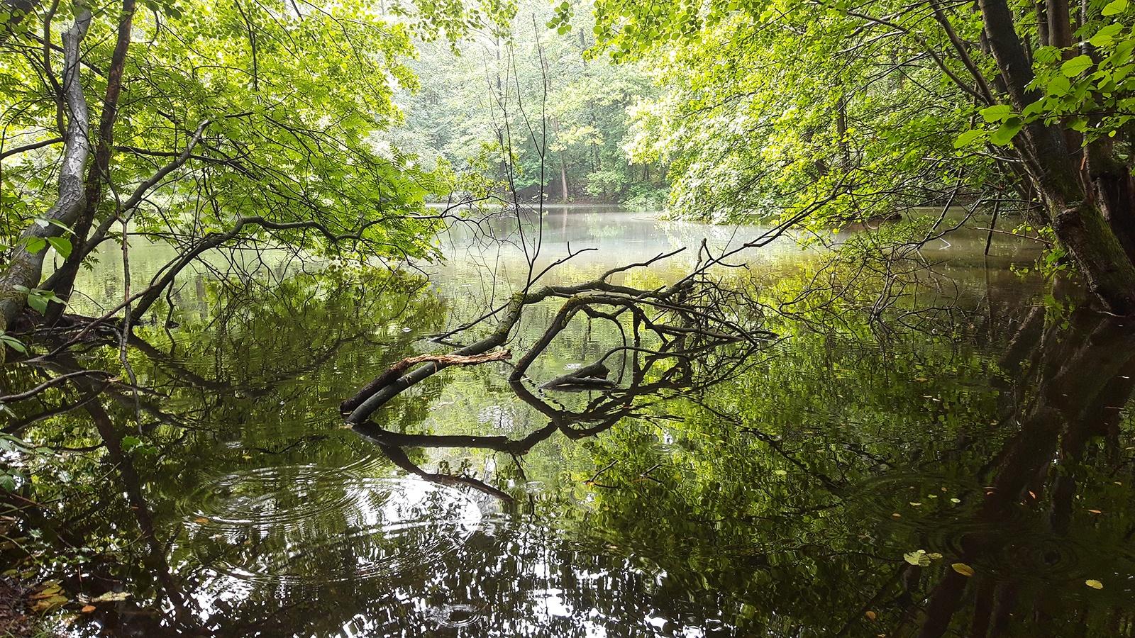 Blick auf einen verwunschen wirkenden Waldsee