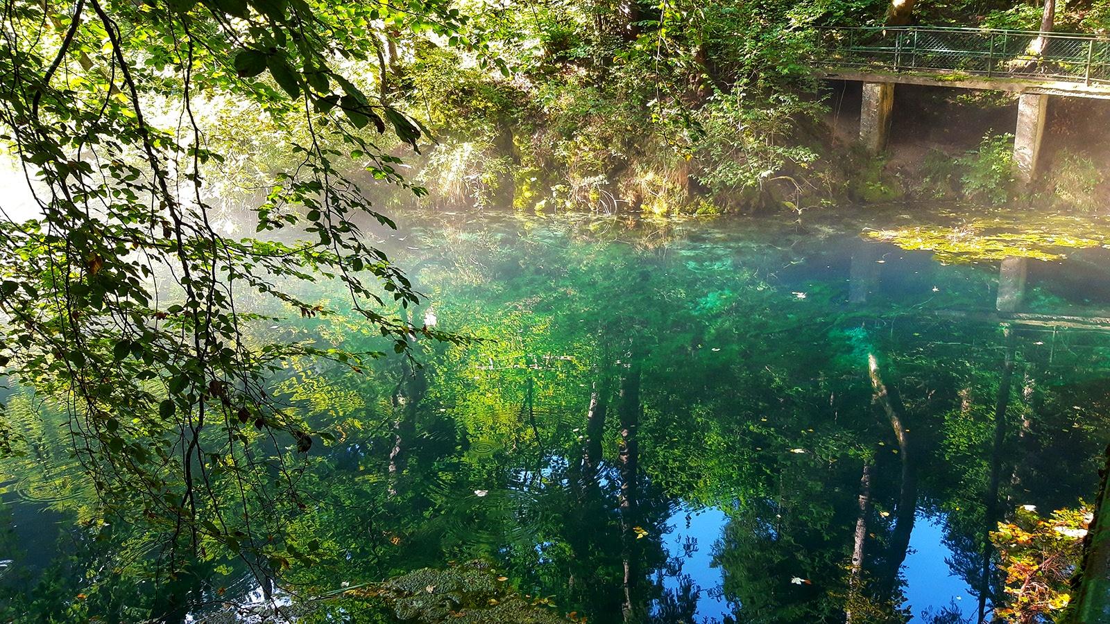 Waldsee in grüntönen leuchtend